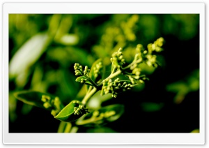 Plant Buds HD Wide Wallpaper for Widescreen