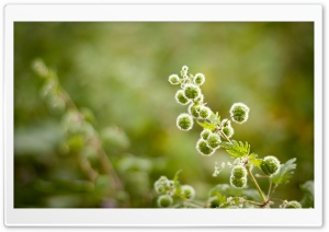 Plant Close Up HD Wide Wallpaper for Widescreen