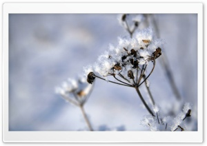 Plant Covered In Snow HD Wide Wallpaper for Widescreen