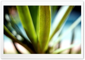 Plant Macro HD Wide Wallpaper for Widescreen