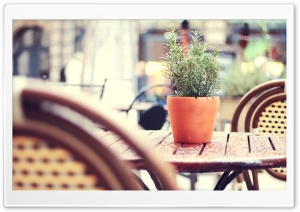 Plant On A Cafe Table HD Wide Wallpaper for Widescreen