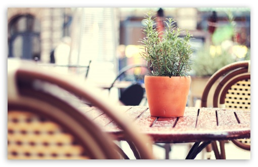 Plant On A Cafe Table HD wallpaper for Wide 16:10 5:3 Widescreen WHXGA WQXGA WUXGA WXGA WGA ; HD 16:9 High Definition WQHD QWXGA 1080p 900p 720p QHD nHD ; UHD 16:9 WQHD QWXGA 1080p 900p 720p QHD nHD ; Standard 4:3 5:4 3:2 Fullscreen UXGA XGA SVGA QSXGA SXGA DVGA HVGA HQVGA devices ( Apple PowerBook G4 iPhone 4 3G 3GS iPod Touch ) ; Tablet 1:1 ; iPad 1/2/Mini ; Mobile 4:3 5:3 3:2 16:9 5:4 - UXGA XGA SVGA WGA DVGA HVGA HQVGA devices ( Apple PowerBook G4 iPhone 4 3G 3GS iPod Touch ) WQHD QWXGA 1080p 900p 720p QHD nHD QSXGA SXGA ;