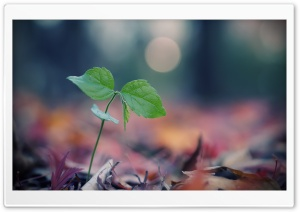 Plant Sprout HD Wide Wallpaper for Widescreen