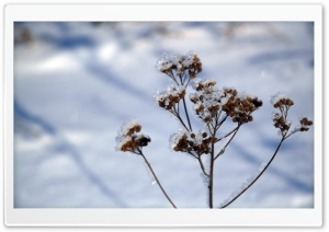 Plant Stem, Winter HD Wide Wallpaper for Widescreen