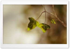 Plant Twig Macro HD Wide Wallpaper for Widescreen