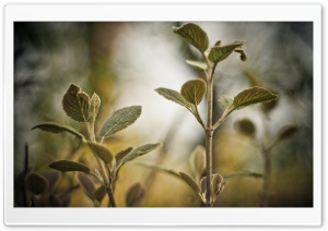 Plant Twigs HD Wide Wallpaper for Widescreen