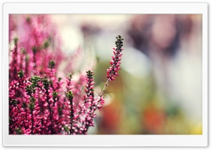 Plant With Pink Flowers HD Wide Wallpaper for Widescreen