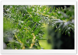 Plant With Small Leaves HD Wide Wallpaper for 4K UHD Widescreen desktop & smartphone