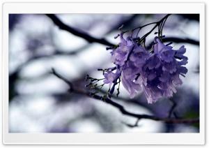 Plants HD Wide Wallpaper for Widescreen