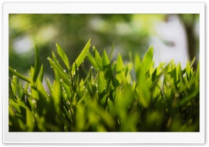Plants Macro HD Wide Wallpaper for Widescreen