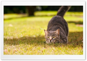 Playful Cat HD Wide Wallpaper for Widescreen