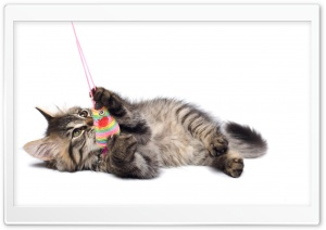 Playful Kitten HD Wide Wallpaper for 4K UHD Widescreen desktop & smartphone