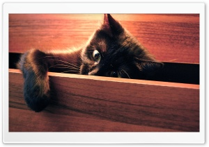 Playful Kitten HD Wide Wallpaper for Widescreen