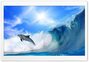 Playing Dolphin HD Wide Wallpaper for Widescreen