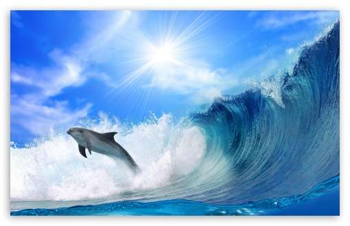 Playing Dolphin HD wallpaper for Wide 16:10 5:3 Widescreen WHXGA WQXGA WUXGA WXGA WGA ; HD 16:9 High Definition WQHD QWXGA 1080p 900p 720p QHD nHD ; Standard 4:3 5:4 3:2 Fullscreen UXGA XGA SVGA QSXGA SXGA DVGA HVGA HQVGA devices ( Apple PowerBook G4 iPhone 4 3G 3GS iPod Touch ) ; Tablet 1:1 ; iPad 1/2/Mini ; Mobile 4:3 5:3 3:2 16:9 5:4 - UXGA XGA SVGA WGA DVGA HVGA HQVGA devices ( Apple PowerBook G4 iPhone 4 3G 3GS iPod Touch ) WQHD QWXGA 1080p 900p 720p QHD nHD QSXGA SXGA ; Dual 16:10 5:3 16:9 4:3 5:4 WHXGA WQXGA WUXGA WXGA WGA WQHD QWXGA 1080p 900p 720p QHD nHD UXGA XGA SVGA QSXGA SXGA ;