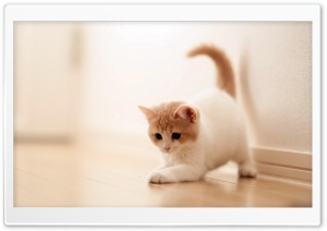 Playing Kitten HD Wide Wallpaper for Widescreen