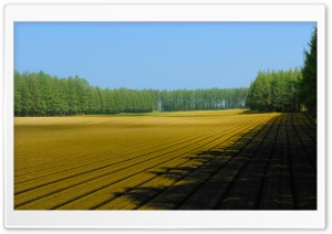 Plowed Field HD Wide Wallpaper for Widescreen