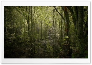 Poison Forest HD Wide Wallpaper for Widescreen