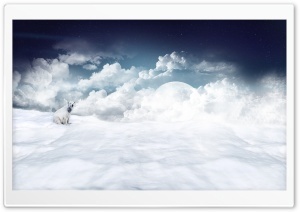 Polar Bear HD Wide Wallpaper for Widescreen