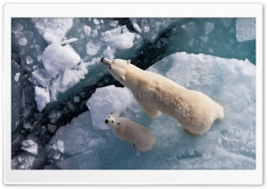 Polar Bear And Global Warming HD Wide Wallpaper for Widescreen