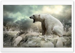 Polar Bear On Ice Ultra HD Wallpaper for 4K UHD Widescreen desktop, tablet & smartphone