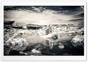 Polar Bear On Melting Ice HD Wide Wallpaper for Widescreen