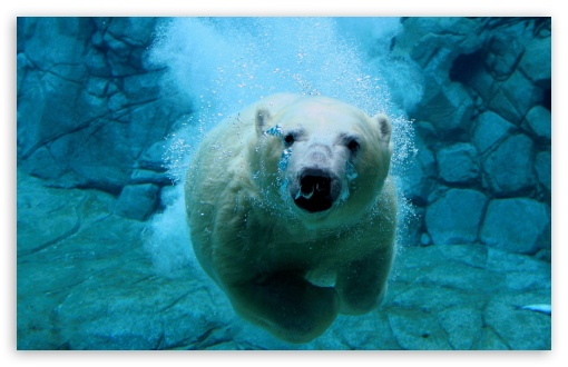 Polar Bear Swimming HD wallpaper for Wide 16:10 5:3 Widescreen WHXGA WQXGA WUXGA WXGA WGA ; HD 16:9 High Definition WQHD QWXGA 1080p 900p 720p QHD nHD ; Standard 4:3 5:4 3:2 Fullscreen UXGA XGA SVGA QSXGA SXGA DVGA HVGA HQVGA devices ( Apple PowerBook G4 iPhone 4 3G 3GS iPod Touch ) ; Tablet 1:1 ; iPad 1/2/Mini ; Mobile 4:3 5:3 3:2 16:9 5:4 - UXGA XGA SVGA WGA DVGA HVGA HQVGA devices ( Apple PowerBook G4 iPhone 4 3G 3GS iPod Touch ) WQHD QWXGA 1080p 900p 720p QHD nHD QSXGA SXGA ;