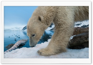 Polar Bear With Whale Bone HD Wide Wallpaper for 4K UHD Widescreen desktop & smartphone