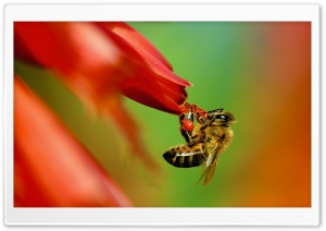 Pollinator HD Wide Wallpaper for Widescreen