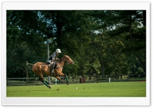 Polo at the Park HD Wide Wallpaper for 4K UHD Widescreen desktop & smartphone