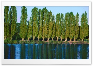 Poplar Trees Near Lake Ultra HD Wallpaper for 4K UHD Widescreen desktop, tablet & smartphone