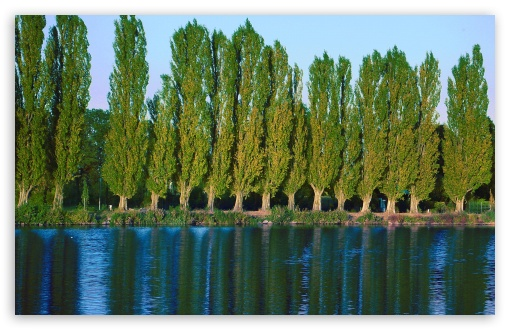 Poplar Trees Near Lake ❤ 4K UHD Wallpaper for Wide 16:10 5:3 Widescreen WHXGA WQXGA WUXGA WXGA WGA ; 4K UHD 16:9 Ultra High Definition 2160p 1440p 1080p 900p 720p ; Standard 4:3 5:4 3:2 Fullscreen UXGA XGA SVGA QSXGA SXGA DVGA HVGA HQVGA ( Apple PowerBook G4 iPhone 4 3G 3GS iPod Touch ) ; Tablet 1:1 ; iPad 1/2/Mini ; Mobile 4:3 5:3 3:2 16:9 5:4 - UXGA XGA SVGA WGA DVGA HVGA HQVGA ( Apple PowerBook G4 iPhone 4 3G 3GS iPod Touch ) 2160p 1440p 1080p 900p 720p QSXGA SXGA ;