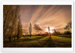 Poplars In The Sunset HD Wide Wallpaper for 4K UHD Widescreen desktop & smartphone