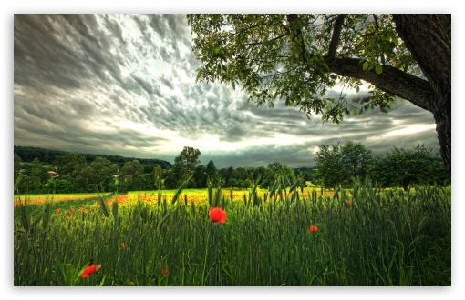 Poppies And Spikelets ❤ 4K UHD Wallpaper for Wide 16:10 5:3 Widescreen WHXGA WQXGA WUXGA WXGA WGA ; 4K UHD 16:9 Ultra High Definition 2160p 1440p 1080p 900p 720p ; UHD 16:9 2160p 1440p 1080p 900p 720p ; Standard 4:3 5:4 3:2 Fullscreen UXGA XGA SVGA QSXGA SXGA DVGA HVGA HQVGA ( Apple PowerBook G4 iPhone 4 3G 3GS iPod Touch ) ; Tablet 1:1 ; iPad 1/2/Mini ; Mobile 4:3 5:3 3:2 16:9 5:4 - UXGA XGA SVGA WGA DVGA HVGA HQVGA ( Apple PowerBook G4 iPhone 4 3G 3GS iPod Touch ) 2160p 1440p 1080p 900p 720p QSXGA SXGA ; Dual 16:10 5:3 16:9 5:4 WHXGA WQXGA WUXGA WXGA WGA 2160p 1440p 1080p 900p 720p QSXGA SXGA ;