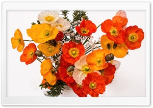 Poppies Bouquet HD Wide Wallpaper for Widescreen