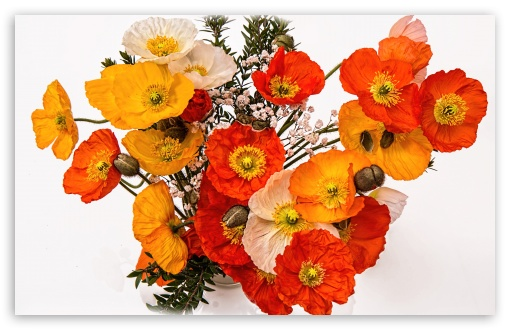 Poppies Bouquet ❤ 4K UHD Wallpaper for Wide 16:10 5:3 Widescreen WHXGA WQXGA WUXGA WXGA WGA ; UltraWide 21:9 24:10 ; 4K UHD 16:9 Ultra High Definition 2160p 1440p 1080p 900p 720p ; UHD 16:9 2160p 1440p 1080p 900p 720p ; Standard 4:3 5:4 3:2 Fullscreen UXGA XGA SVGA QSXGA SXGA DVGA HVGA HQVGA ( Apple PowerBook G4 iPhone 4 3G 3GS iPod Touch ) ; Smartphone 16:9 3:2 5:3 2160p 1440p 1080p 900p 720p DVGA HVGA HQVGA ( Apple PowerBook G4 iPhone 4 3G 3GS iPod Touch ) WGA ; Tablet 1:1 ; iPad 1/2/Mini ; Mobile 4:3 5:3 3:2 16:9 5:4 - UXGA XGA SVGA WGA DVGA HVGA HQVGA ( Apple PowerBook G4 iPhone 4 3G 3GS iPod Touch ) 2160p 1440p 1080p 900p 720p QSXGA SXGA ;