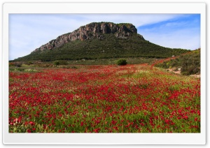 Poppy Field HD Wide Wallpaper for Widescreen