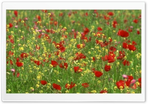 Poppy Field 1 HD Wide Wallpaper for Widescreen