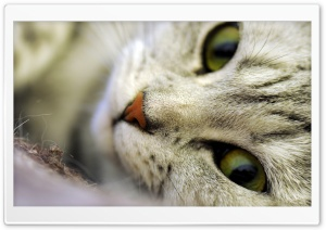 Posing Cat HD Wide Wallpaper for Widescreen