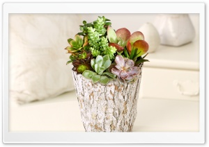 Potted Succulent Garden HD Wide Wallpaper for Widescreen