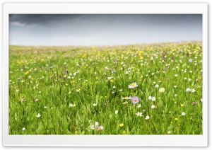 Prairie Summer Flowers HD Wide Wallpaper for Widescreen