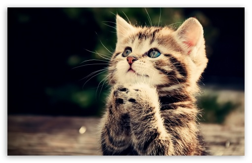 Funny And Cute Cat Pictures 21 Background: Prayer 4K HD Desktop Wallpaper For 4K Ultra HD TV • Wide