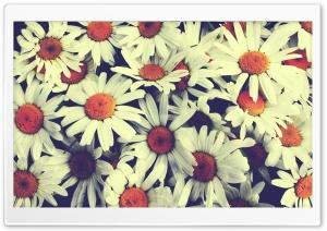 Pretty Flowers Ultra HD Wallpaper for 4K UHD Widescreen desktop, tablet & smartphone