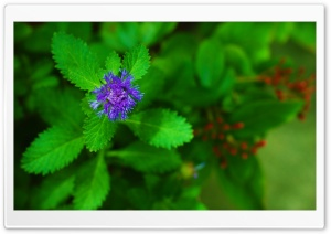 Pretty Purple Flower HD Wide Wallpaper for Widescreen