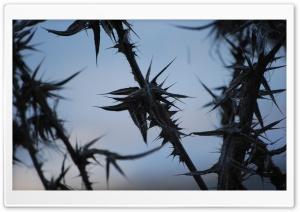 Prickly Silhouette Ultra HD Wallpaper for 4K UHD Widescreen desktop, tablet & smartphone