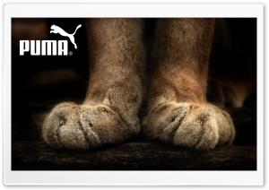 Puma HD Wide Wallpaper for 4K UHD Widescreen desktop & smartphone