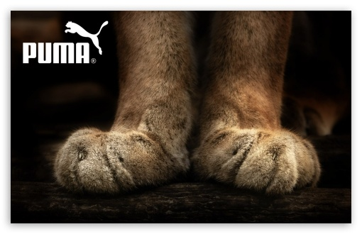 Puma HD wallpaper for Wide 16:10 5:3 Widescreen WHXGA WQXGA WUXGA WXGA WGA ; HD 16:9 High Definition WQHD QWXGA 1080p 900p 720p QHD nHD ; Standard 3:2 Fullscreen DVGA HVGA HQVGA devices ( Apple PowerBook G4 iPhone 4 3G 3GS iPod Touch ) ; Mobile 5:3 3:2 16:9 - WGA DVGA HVGA HQVGA devices ( Apple PowerBook G4 iPhone 4 3G 3GS iPod Touch ) WQHD QWXGA 1080p 900p 720p QHD nHD ;