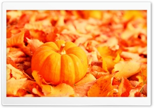 Pumpkin And Autumn Leaves HD Wide Wallpaper for Widescreen