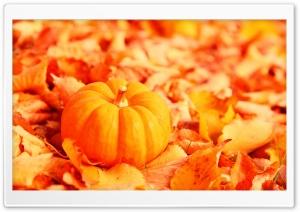 Pumpkin And Autumn Leaves Ultra HD Wallpaper for 4K UHD Widescreen desktop, tablet & smartphone