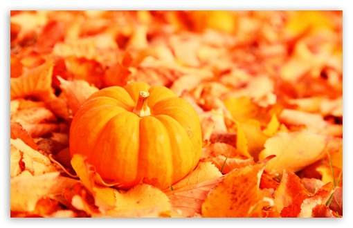 Pumpkin And Autumn Leaves HD wallpaper for Wide 16:10 5:3 Widescreen WHXGA WQXGA WUXGA WXGA WGA ; HD 16:9 High Definition WQHD QWXGA 1080p 900p 720p QHD nHD ; UHD 16:9 WQHD QWXGA 1080p 900p 720p QHD nHD ; Standard 4:3 5:4 3:2 Fullscreen UXGA XGA SVGA QSXGA SXGA DVGA HVGA HQVGA devices ( Apple PowerBook G4 iPhone 4 3G 3GS iPod Touch ) ; Tablet 1:1 ; iPad 1/2/Mini ; Mobile 4:3 5:3 3:2 16:9 5:4 - UXGA XGA SVGA WGA DVGA HVGA HQVGA devices ( Apple PowerBook G4 iPhone 4 3G 3GS iPod Touch ) WQHD QWXGA 1080p 900p 720p QHD nHD QSXGA SXGA ;
